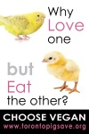 Why Eat Chicken?