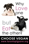 Why Love Dogs but Now Cows?
