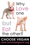 Why Love Dogs but Eat Pigs?