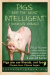 Pigs are Intelligent