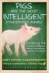 Pigs are Intelligent